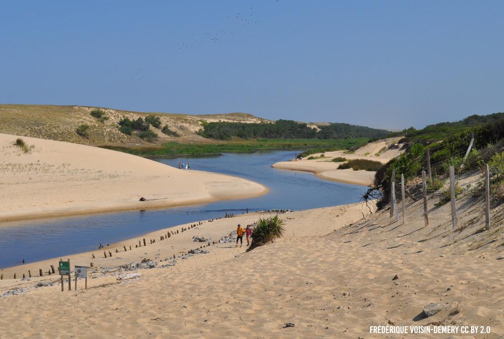 Les dunes dans le courant d'Huchet